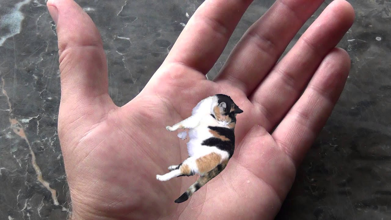 Worlds Smallest Cat