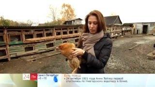 """Сюжет """"Животные гипнотизеры"""" в программе ОРТ """"Доброе утро"""" с участием Елены Вальяк"""