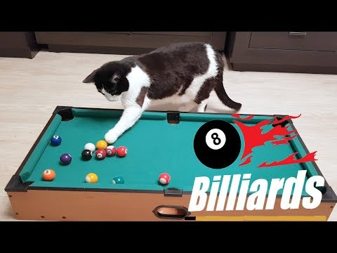 Бильярд. Человек против кота Пусика