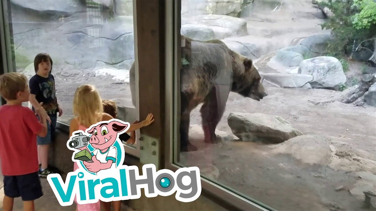 Funny Video: Bear Poops Right In Front of Kids