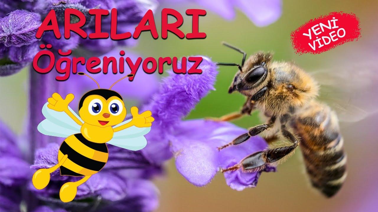 Download ARILAR - Arıları Öğreniyoruz - Çocuklar için Eğitici Video