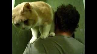 Супер прыжок кота Сева