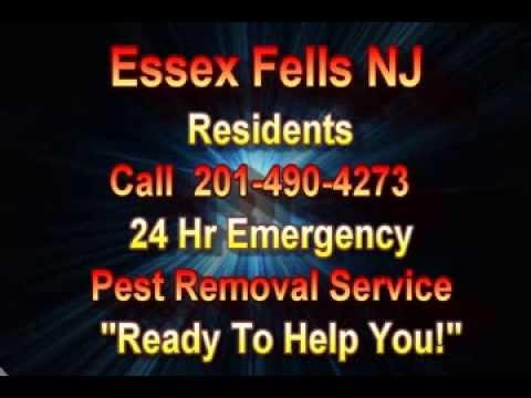 24 Hr Emergency Pest Control Essex Fells NJ Call 201-490-4273