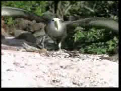 Чудесные птицы