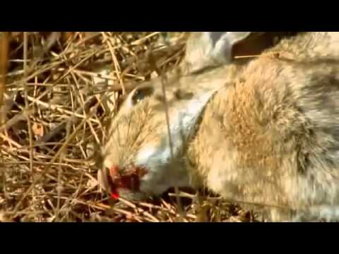 Spain Documentary: The Beautiful but Endangered Iberian Lynx in its Stunning Natural Surroundings