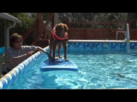 Dog surfing: Teach your dog to surf - Confidence in water