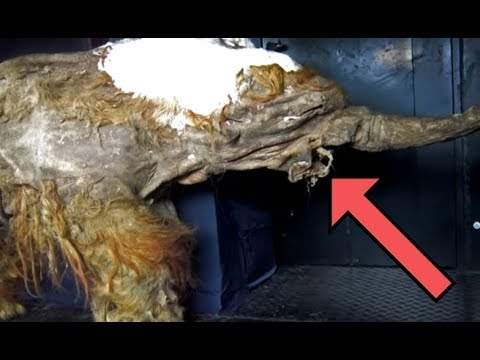 SHOCKING Discoveries Made in Russia