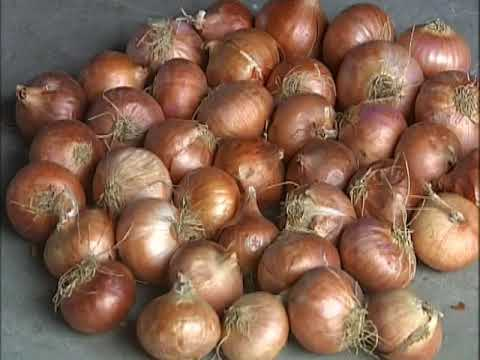 Krishi Darshan I How to Make Rabi Onion Nursery