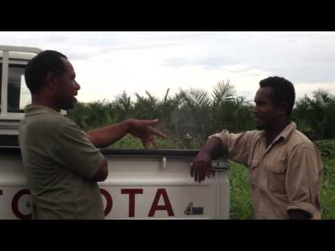 Technical assistance to cocoa farmers in the Solomon Islands