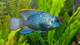 Нанокара голубой неон nanocara electric blue