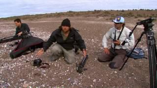 O ATAQUE DAS BALEIAS ORCAS NA PATAGONIA | RICHARD RASMUSSEN thumbnail