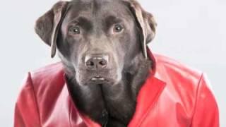 Funny Talking Dog Joke - Bartender