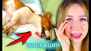 СОБАКА ВЫХОДИТ ИЗ НАРКОЗА ЭЛЛИ ПЛАЧЕТ ОПЕРАЦИЯ МОЕЙ СОБАКИ | Elli Di Pets