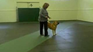 Dancing Sharpei ~ Copacabana~canine Freestyle Lola