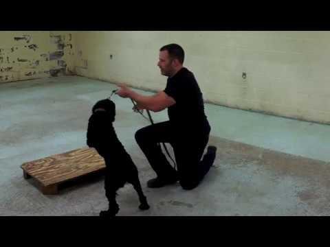 Humane Punishment in Dog Training - Live Classroom Sample 2 (k9-1.com)
