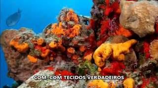 Paródia Reino Animal (CABV; 2016; 122) - Kill 'Em With Kindness, Selena Gomez