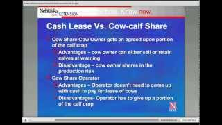 cow calf share or cash cow leases