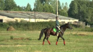 Конный спорт - их профессия и хобби. Один день из жизни семьи Ульяновых