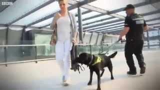 Uk Border Agency Search Dog's