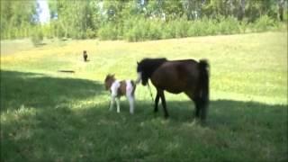 Супер Приколы с лошадьми!!! 2013
