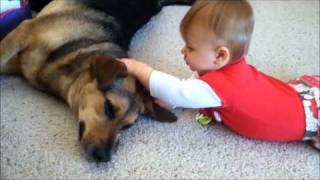 Маленькие дети и собака-сплошной позитив