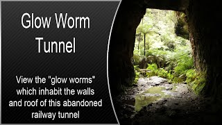 Glow Worm Tunnel - Newnes, NSW