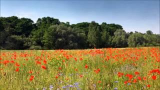 Denis Laurent & Kaisa Martina - My Feelings For You (Original Vocal Mix)