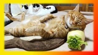 Забавные кошки видео, прикольные кошки, смешные кошки Для детей Создай себе хорошее настроение