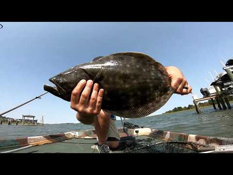 CITATION FLOUNDER!!! + SLOT RED DRUM NC FISHING