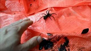Testa aranha se da livrar na das como veias