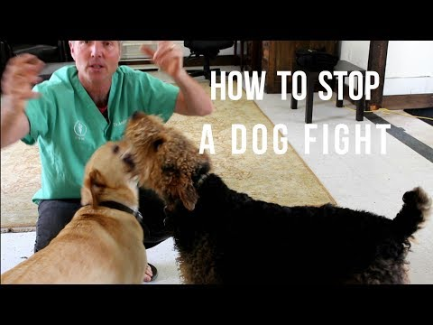 how-to-stop-dog-fighting