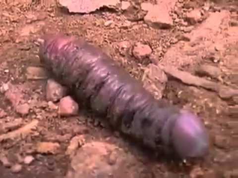 Wierd Penis 75
