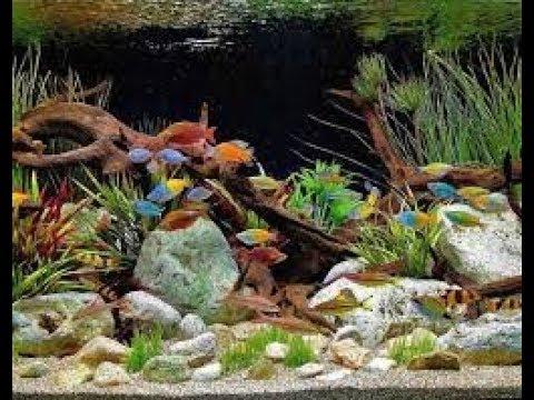 Buy Cheap Aquarium Decorations Online At Wholesale Price