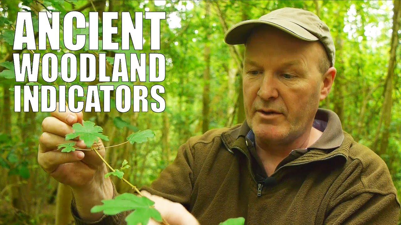 Ancient Woodland Indicators
