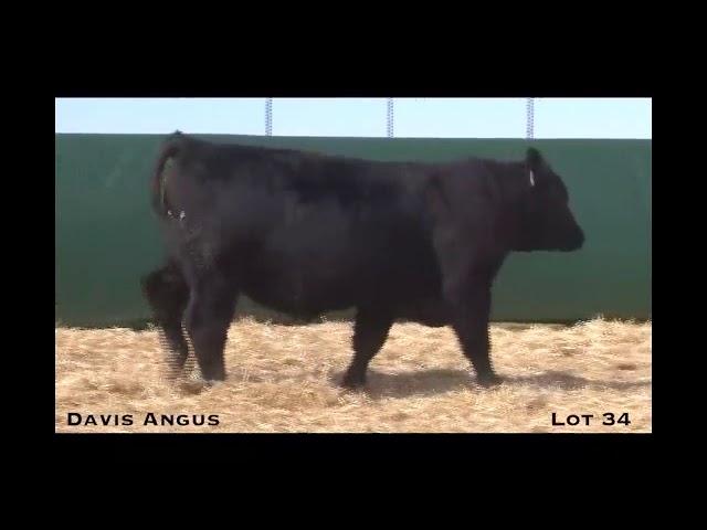 Davis Angus Lot 34