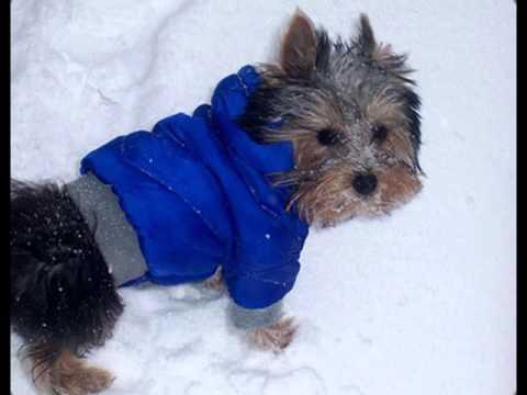 Вязаная одежда на собак своими руками