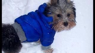 купить вязаную одежду для собак на авито