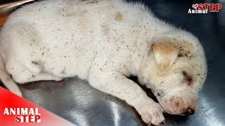 Homeless Puppy Covered by Flea and Rotting Worm on His Back, Watch His Happy Ending