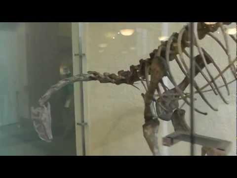 On Location: The Plateosaurus