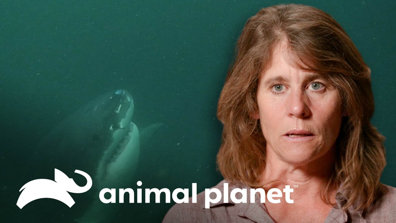 Impactante revelación de sobreviviente de un ataque de tiburón | Solo y en peligro | Animal Planet