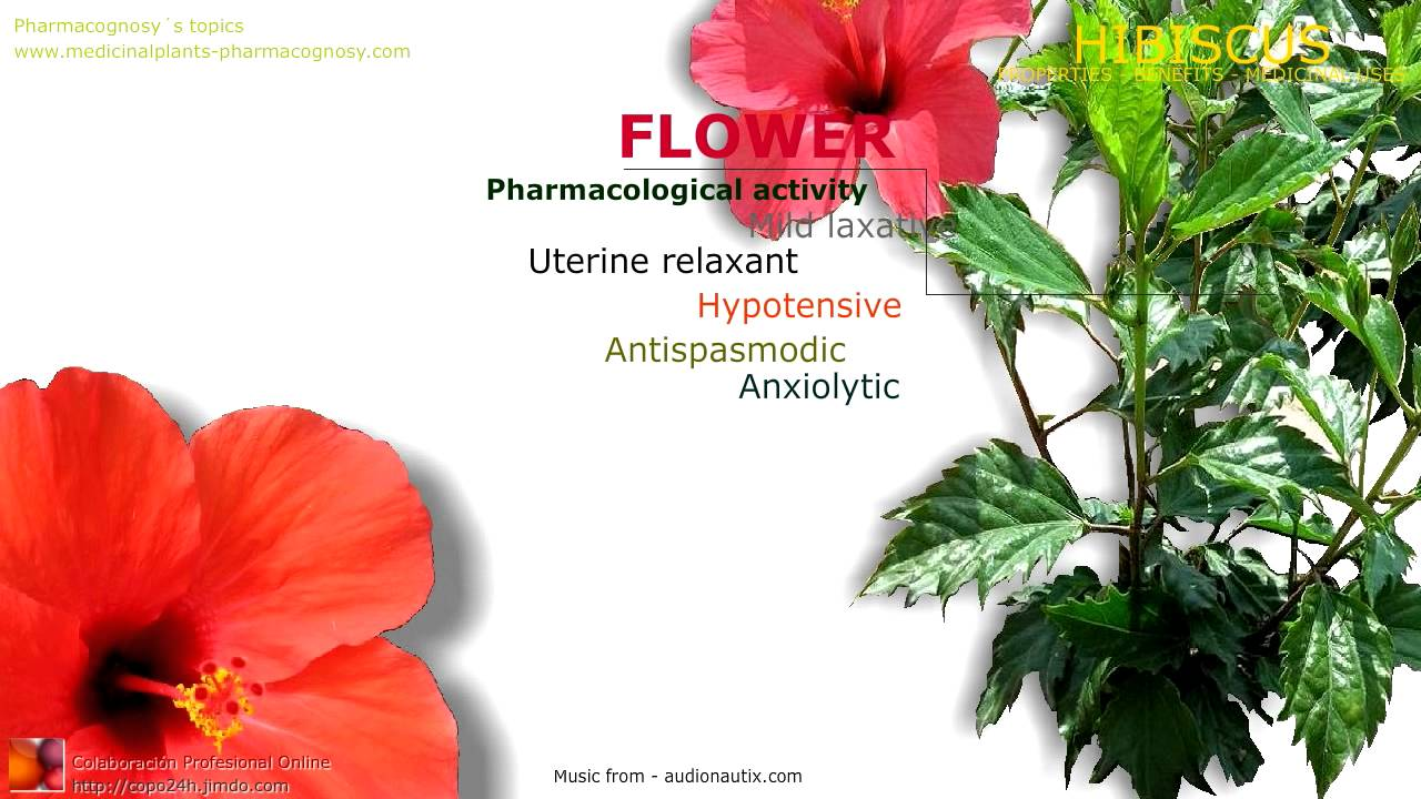 Hibiscus benefits health benefits attributed to the hibiscus hibiscus benefits health benefits attributed to the hibiscus flowers youtube izmirmasajfo Image collections