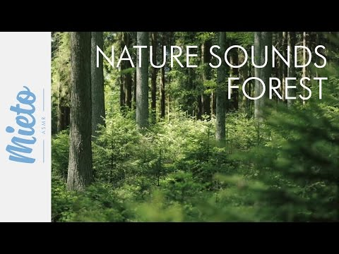 ASMR. Nature Sounds - Forest