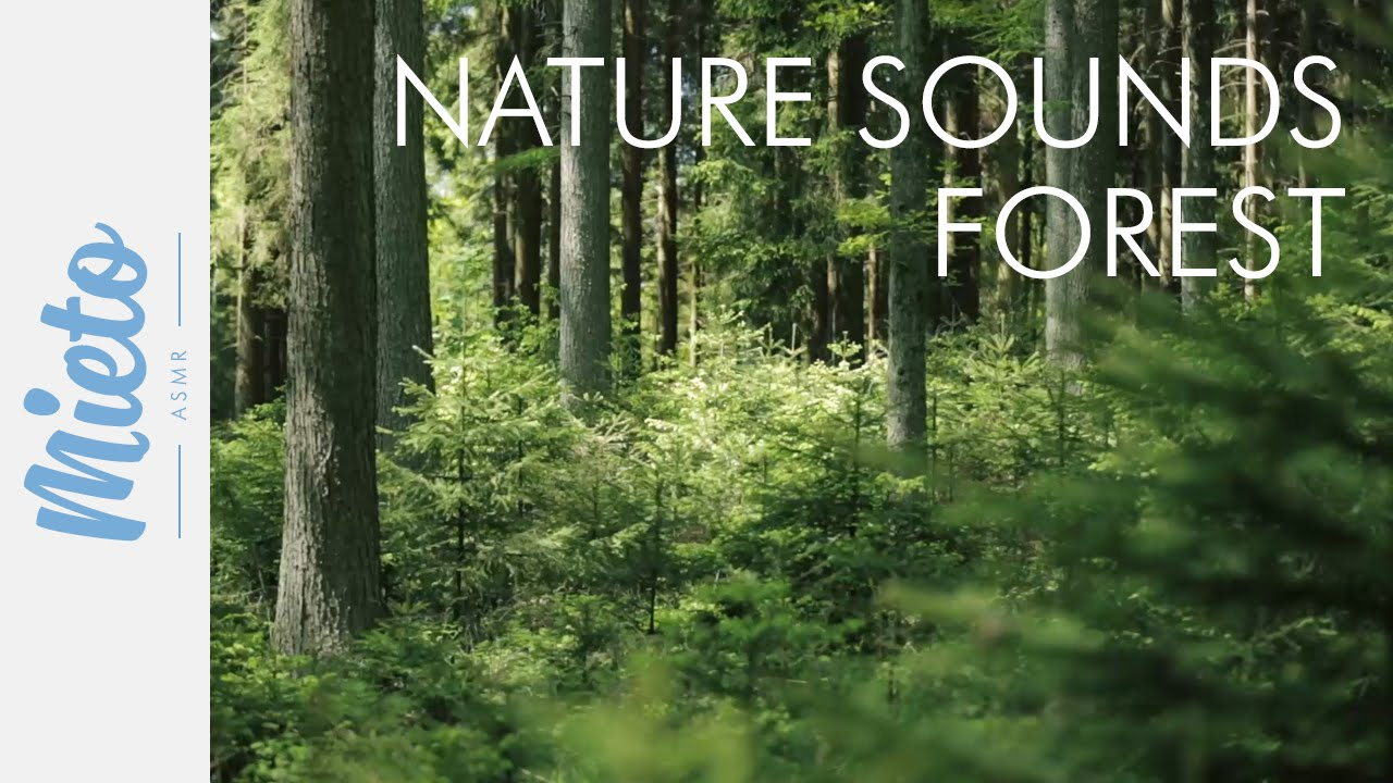 ASMR  Nature Sounds - Forest