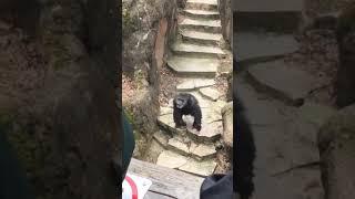 Porn hub monkey