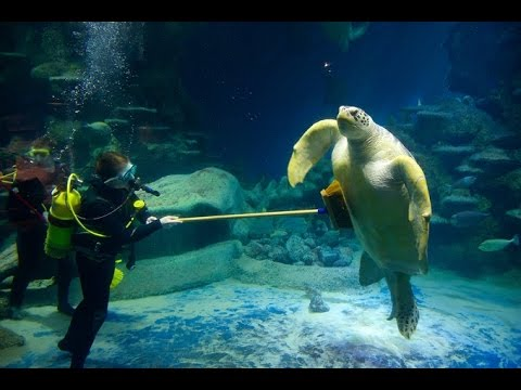 SEA LIFE London Aquarium, Full HD walk around, with NEMO and Grumpy Crab !