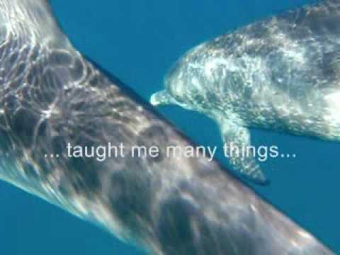 The Cove PSA  My Dolphin Friend...  teaches Trust & Joy