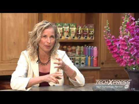 TechXpress E-commerce Website Solutions Case Study with Teeccino Herbal Coffee
