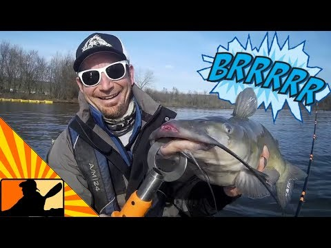 Cold Water Catfish!