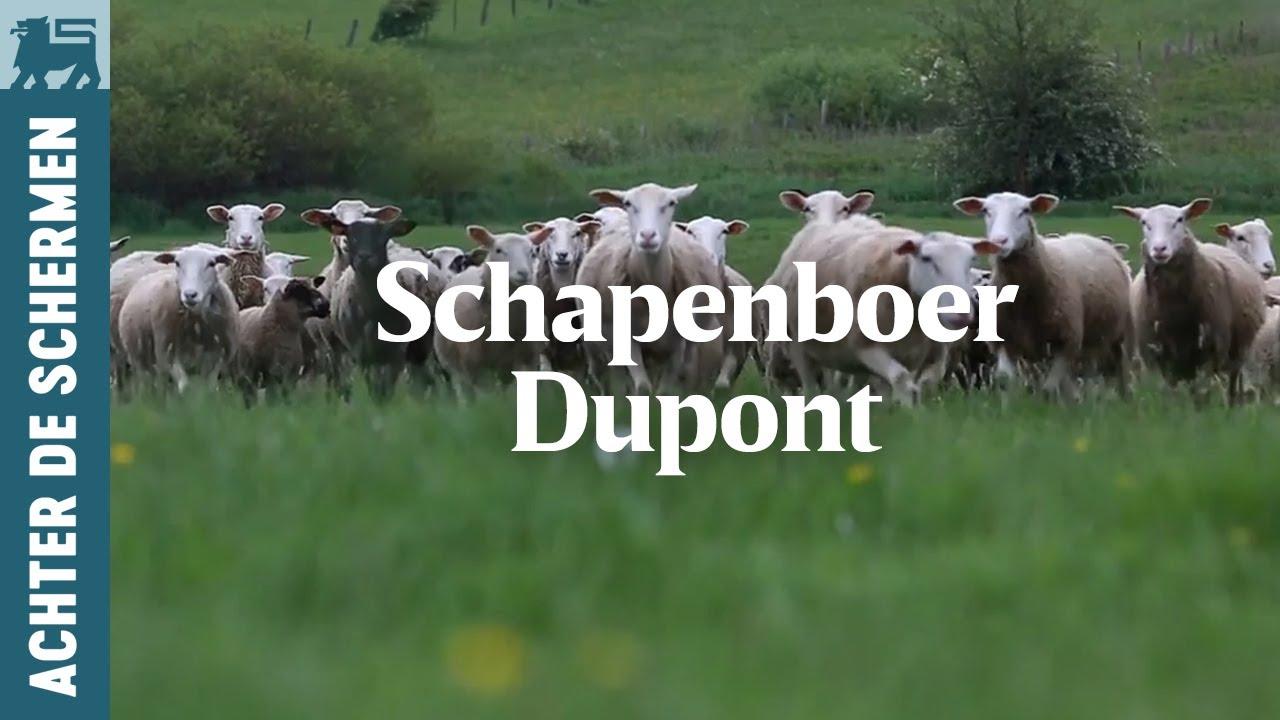 Download Schapenboer Dupont