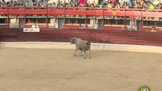 Cortes de Medina del Campo 2014 - Toro de la Final